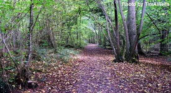 Anston Stones Wood in the Autumn